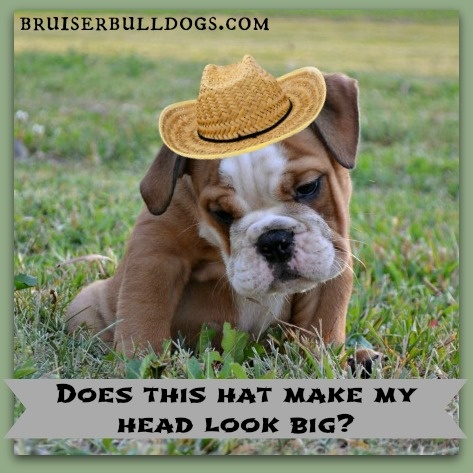 bulldog jokes 17 best images about bulldog humor on pinterest mondays 1492