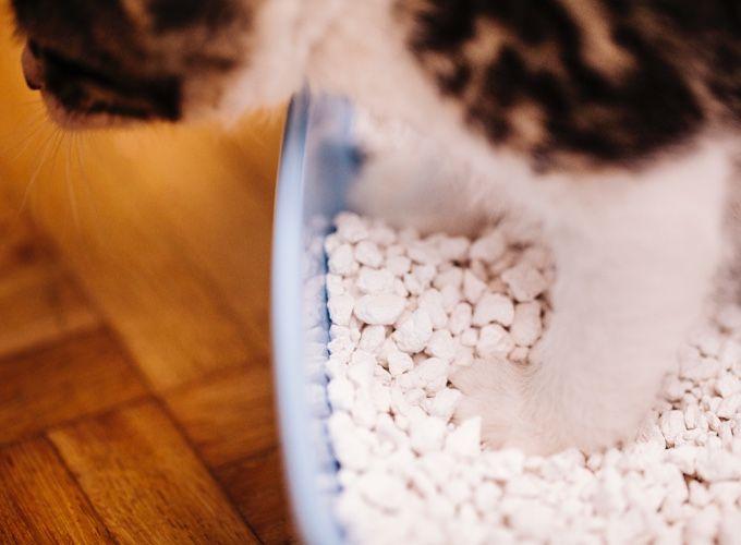 5 astuces pour supprimer les odeurs de litière - Yummypets