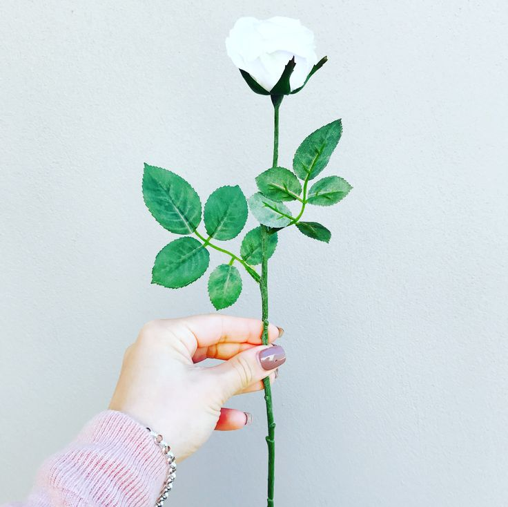 This premium artificial single stem white rose with foliage is perfection. Measuring a long 36cm in length and a diameter of 5.5cm.