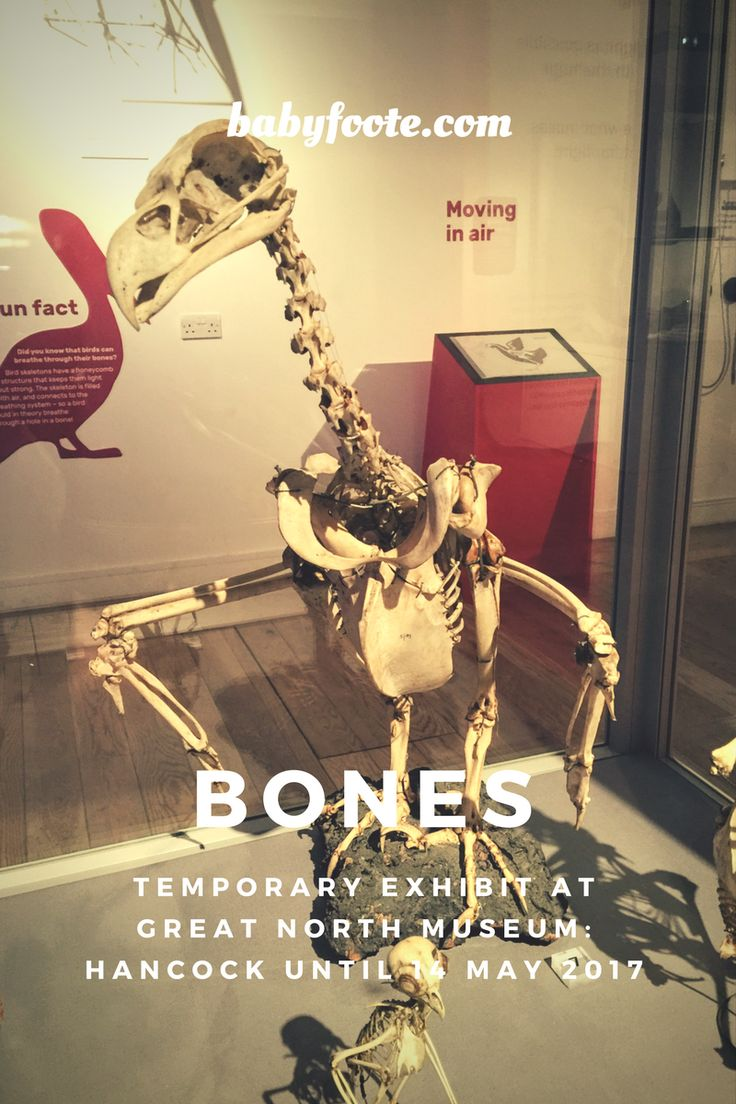 Bones is a temporary exhibit at Great North Museum: Hancock, exploring all things related to skeletons in the animal world. Many questions your preschooler or older child may have asked are answered here, and the exhibit is fascinating for adults and little ones alike.