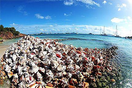 Cimetière de lambis// Saint-Vincent-et-les-Grenadines > Tobago Cays > Baradol