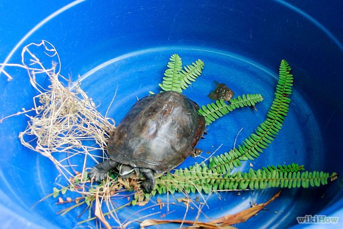 Take Care of a Land Turtle Step 6.jpg
