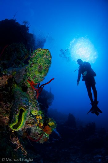 30 best images about sunset house grand cayman on for Deep sea fishing grand cayman