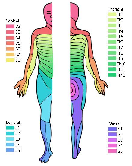 spinal cord medicine kirshblum pdf