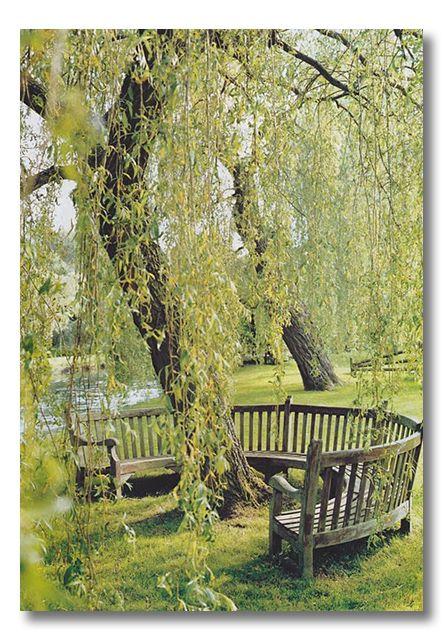 beautiful setting & bench