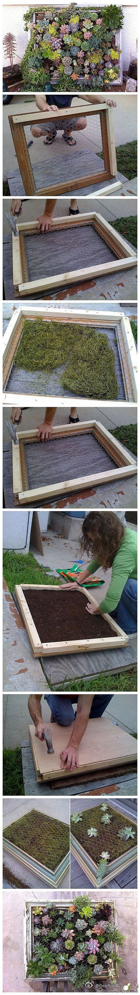 Succulent frame... been trying to figure out something cool to hang on the fence. These could be fun :):