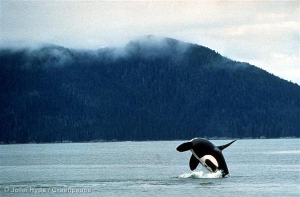 Whale Facts - Greenpeace USA