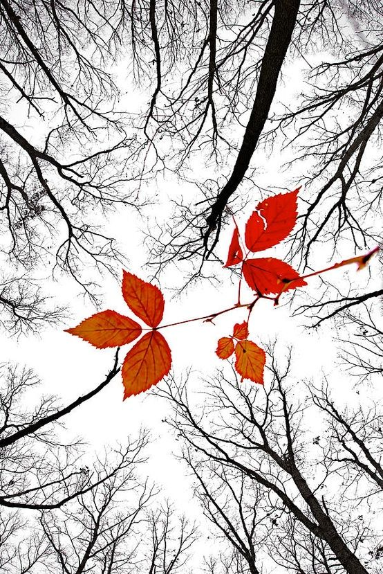 The last leaves of November