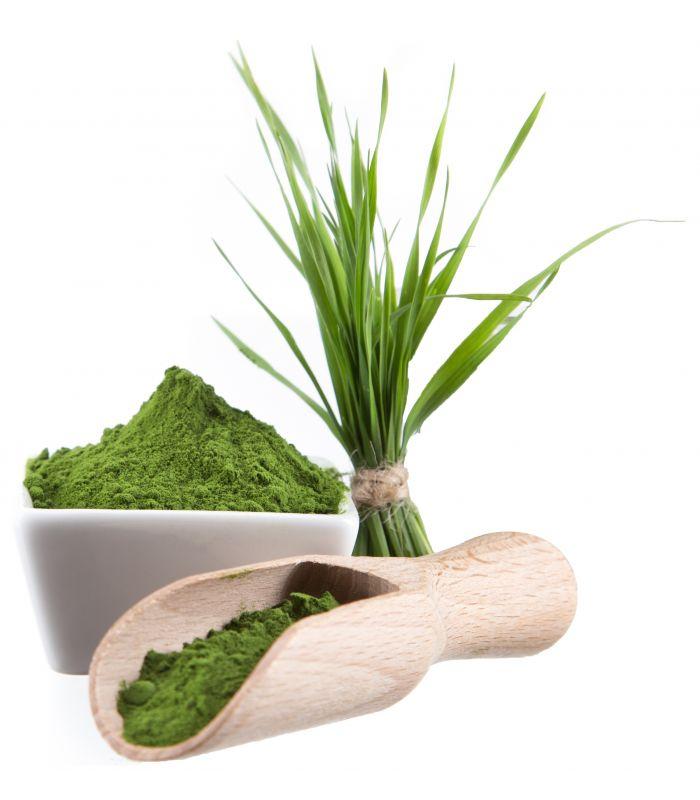 Wheatgrass Powder - Organic