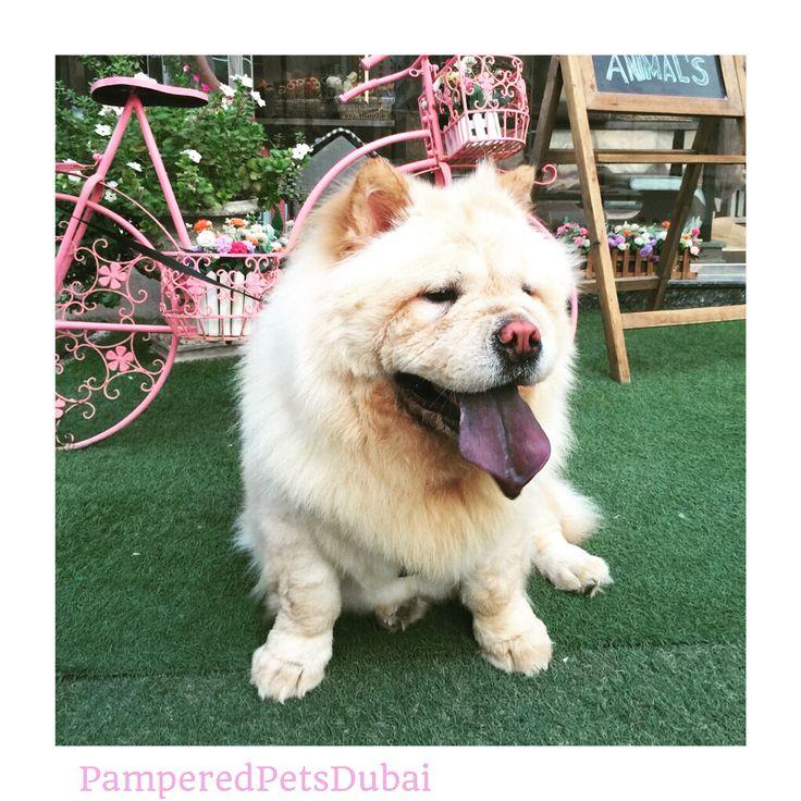 Dog Grooming Warren Ri
