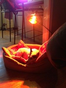 25 Best Ideas About Light Therapy On Pinterest Led
