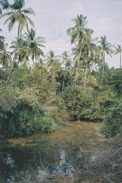 selva