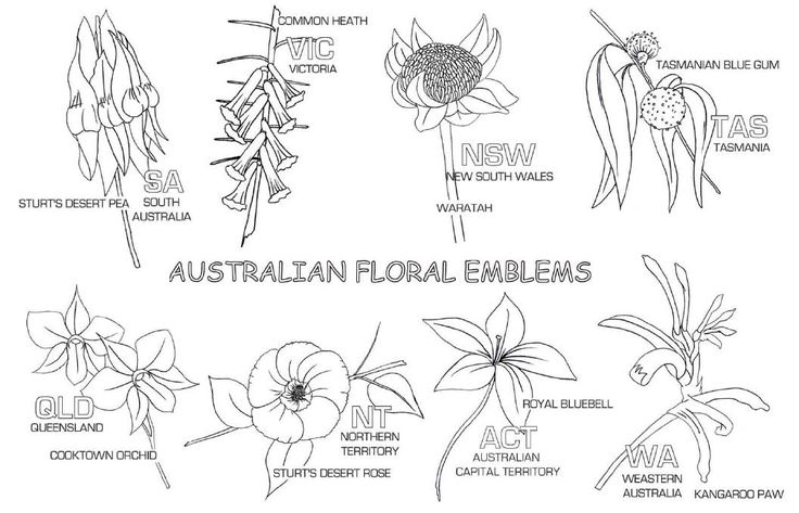 Connect and have fun with your children while learning about Australia State Floral Emblems.