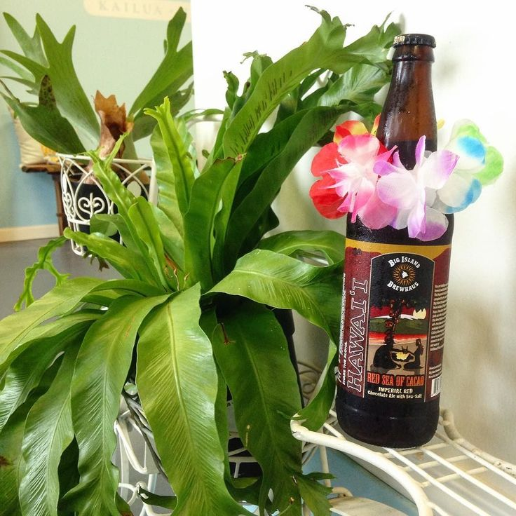 Hurry on in to get a taste of this seasonal beer all the way from our one of our neighboring island brewers Big Island Brewhouse! ハワイ島から来た 季節限定ビール #hawaii #kailua #kailuabeach #lanikaibeach #kailuatown #wholefoods #beer #craftbeer #threepekombuchaakshawaiigift #threepeaks #hydroflask #nitrocoffee #kombucha #gift #localsesigner #island #glutenfree #organic #ハワイ #カイルア #ギフト  #ホールフーズ #クラフトビール #地ビール #ハワイ限定 #お土産 #ハワイ旅行 #オススメ #ラニカイ #ショッピング