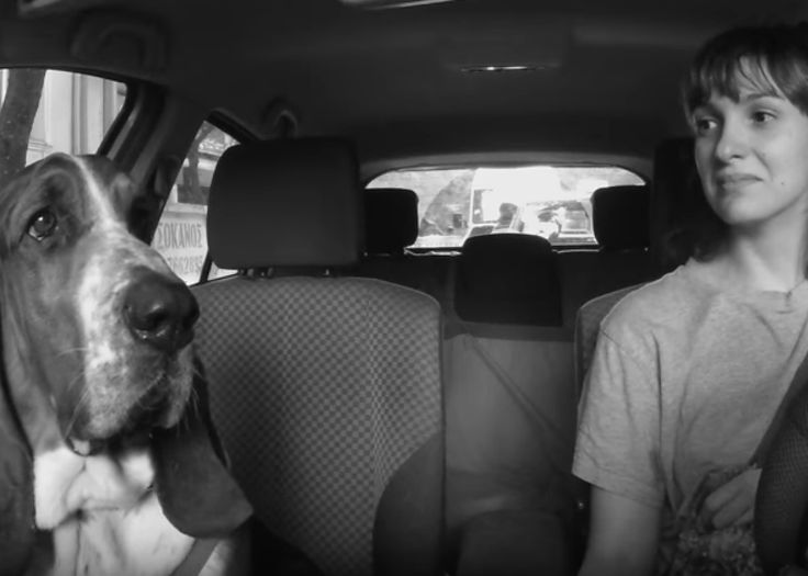 Basset and owner musical commute video