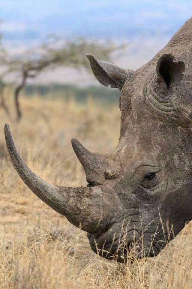 Kenya. Lewa conservancy. By John Niva