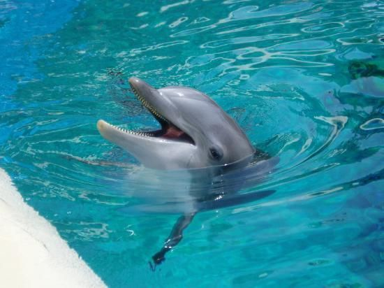 125 Best Images About Wow On Pinterest Horse Farms Killer Whales And Shark Attacks
