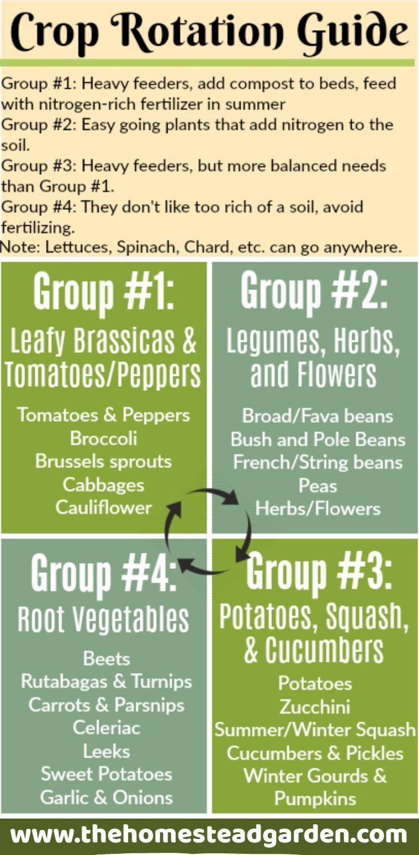Crop Rotation Guide Crop Rotation Organic Gardening Tips Garden Soil Backyard garden crop rotation