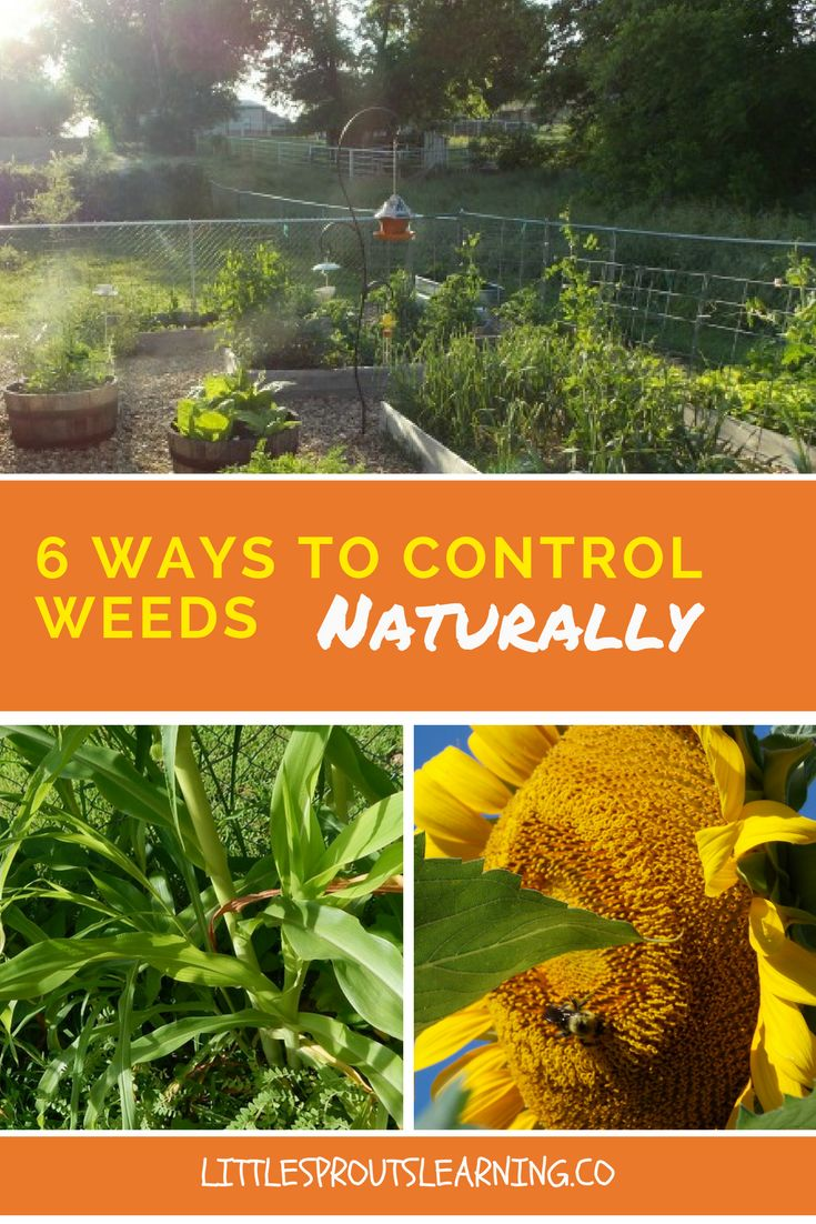 weeds vegetable gardens beds grasses for killer in grass getting preventing rid garden watch of