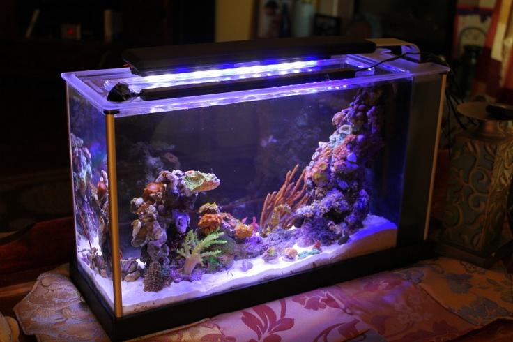 Fluval spec 5 gallon converted to pico reef tank aquaria for Cheap 5 gallon fish tank