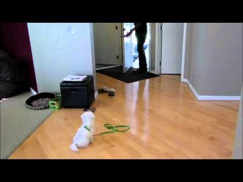 Puppy Separation Anexity - DOG INTERVENTION Dog Whisperer/Interventionis...
