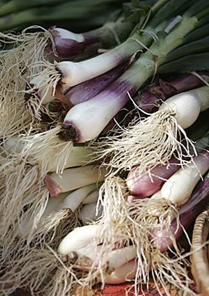 Enjoying the scent of spring onions at the Santa Monica Farmer's Market this morning! http://lat.ms/IpXTwW via @Los Angeles Times