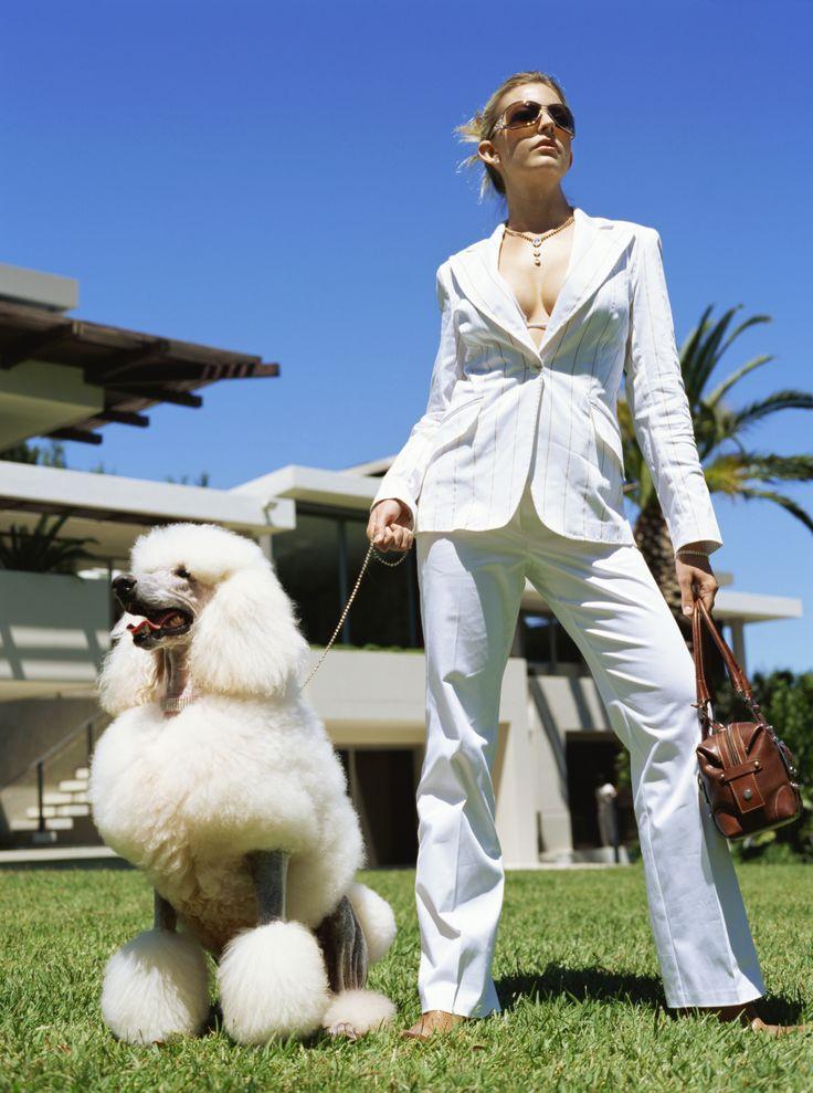Diferentes tipos de tosa e cortes para Poodles