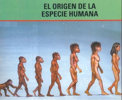 origen especie humana-muj