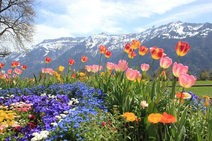 VIAJE EUROPAMUNDO -  Suiza al completo
