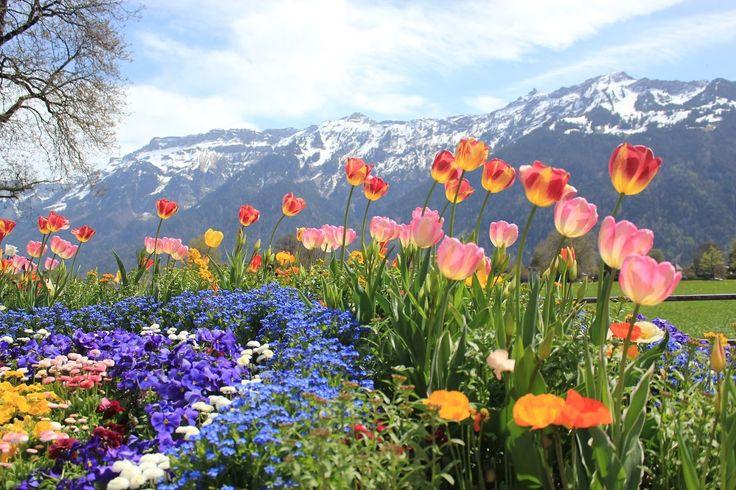 VIAJE EUROPAMUNDO -  Suiza al completo Desde el Lago Constanza hasta las Cataratas del Rhin, pasando por la cueva de hielo con este recorrido te enseñaremos cada rinconcito de Suiza: cuevas, castillos, parques, cataratas, nieve, quesos, chocolate... Déjate admirar por este vídeo y por las maravillas que verás en Suiza con nosotros. ¡Seguro que te enamorarás!