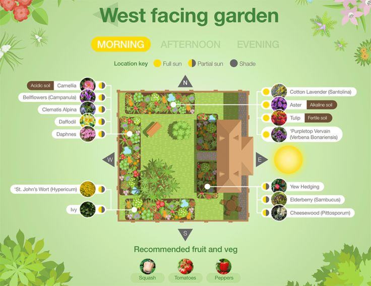 Plant suggestions for a North, South, East or West facing ...