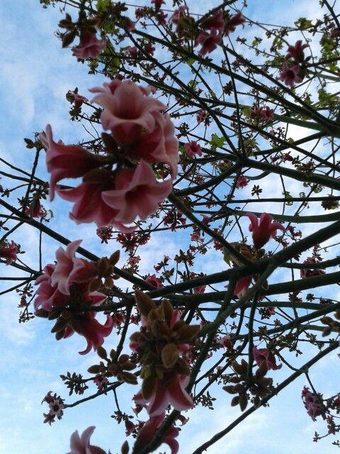 Δέντρα από την είσοδο Στυλίδας Λαμίας!!!!!