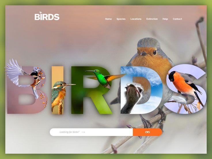 Birds Website design by inthink.studio
