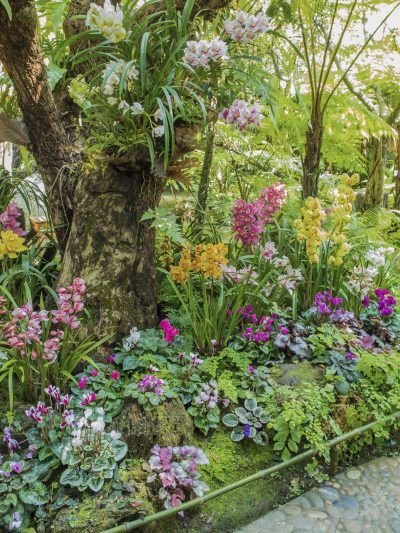 Landscaping Ideas Zone 9 : Best ideas about zone gardening on front