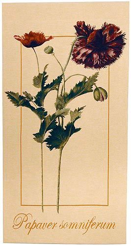 """Redoute's Papaver Somniferum wall tapestry. A French wall tapestry matching the Rosa Gallica design: 52""""x28""""."""
