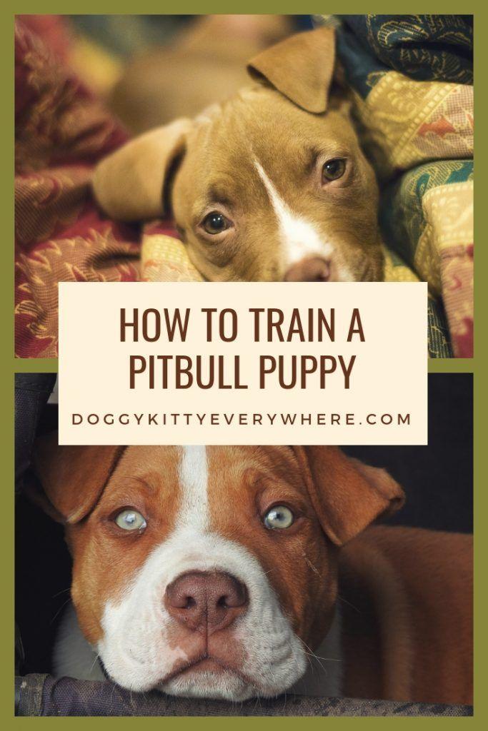 How To Train A Pitbull Puppy Pitbulls Pitbulllove