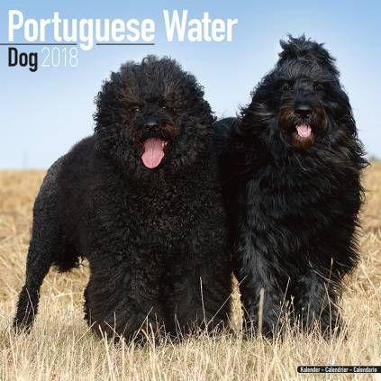 Avonside Hunde-Kalender 2018Avonside Hunde Wandkalender 2018: Portuguese Waterdog - Portugiesischer Wasserhund