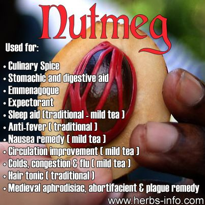 [*NUTMEG CAN MAKE YOU FEEL HIGH* Grind 1 - 2 fresh nutmeg and drink in some eggnog (the best) or whatever (I don't care for the taste except in eggnog) and after 1-2 hours, you will feel very happy. ]❤Nutmeg is a popular (and formerly notorious) spice that is derived from the fruit (specifically the seeds) of the nutmeg tree - Myristica fragrans; a large evergreen tree native to the Banda Islands in Indonesia.❤