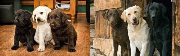 En İyi Arkadaşlar Köpeklerin ''Önce'' Ve ''Sonra'' Halleri - http://www.aylakkarga.com/en-iyi-arkadaslar-kopeklerin-ve-sonra-halleri/