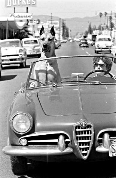 "Ralph Crane - Great Dane ""Thor"" Rides Around In Sports Car With Mistress, 1961. ☀"