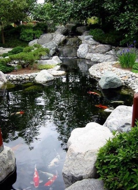145 best images about cool koi on pinterest japanese koi for Cool koi ponds