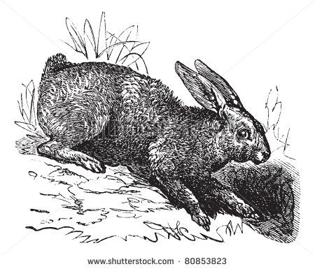 etching flora and fauna - Google Search