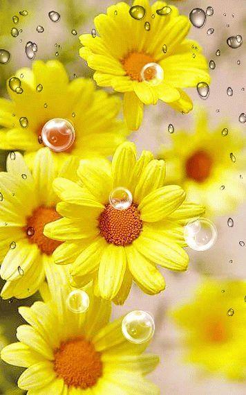 ms de ideas increbles sobre flores amarillas en pinterest flores margaritas amarillas y nombres de flores amarillas