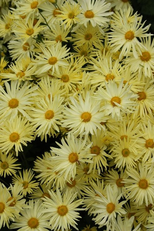 17 Best Images About Bloemen En Planten On Pinterest