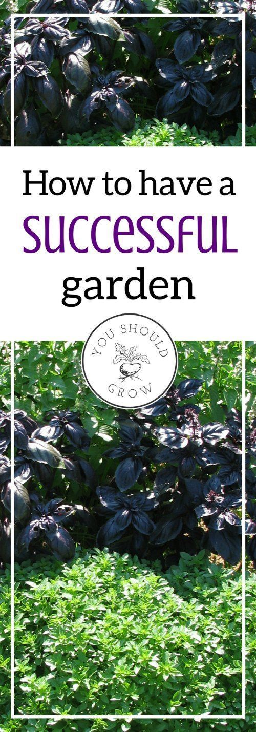 Do you ever wonder why some people seem to have such great success at gardening? Follow these tips for a successful garden and more homegrown food. via @whippoorwillgar