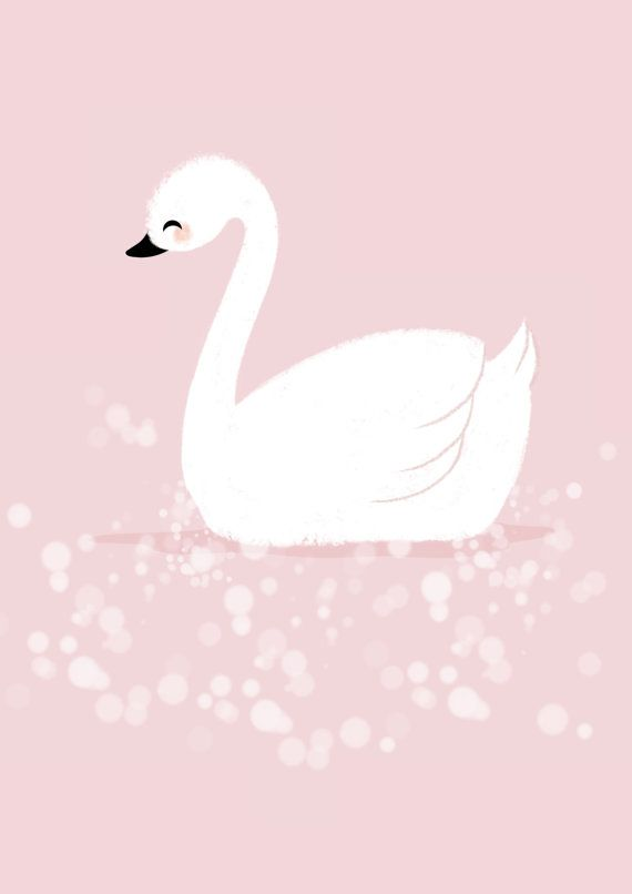 Isn't she lovely white swan www.mim-pi.com
