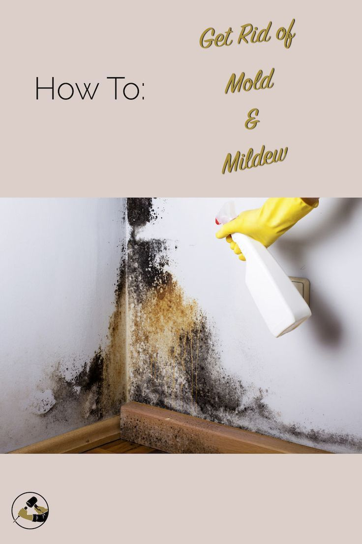 29422f93659fdfda1e5d972b0953eb86 - How To Get Rid Of The Mold In The House