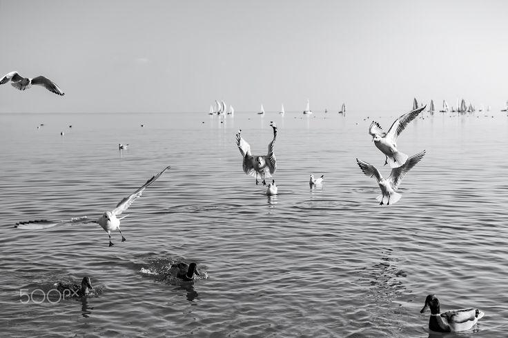 fly away - Lake Balaton, Hungary