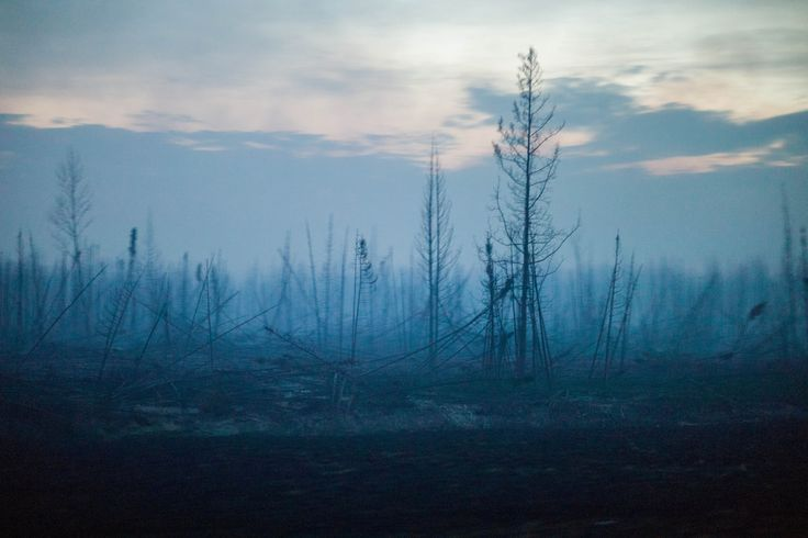Scientists say the near-destruction of Fort McMurray last week by a wildfire is the latest indication that the vital boreal forest is at risk from climate change.