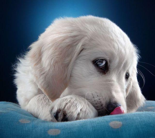 Картинки скучаю с собаками